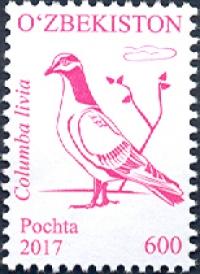 1187. «Columba livia» (Ko'k kaptar)